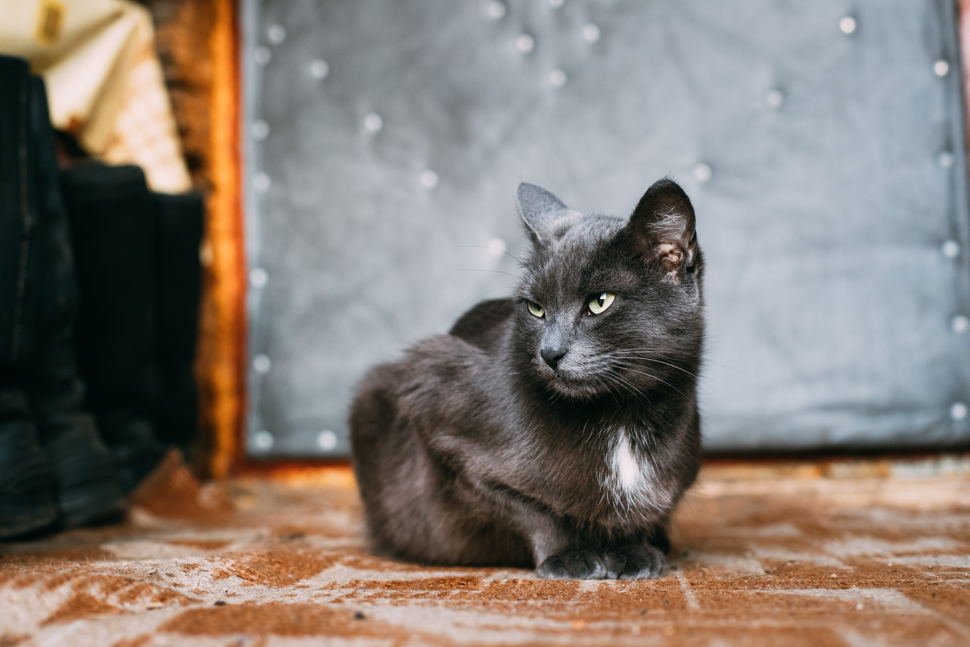 Russian Blue Cat Kitten Resting On Porch Of An Old Village Rusti